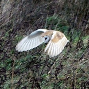 Bird Watching - 2016-02-09 Martin Mere-3