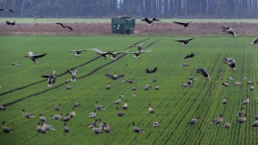 bird-watching-2016-11-08-lunt-meadows-1